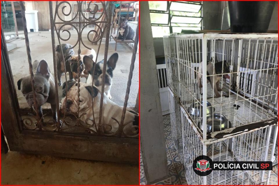 animais presos em canil clandestino